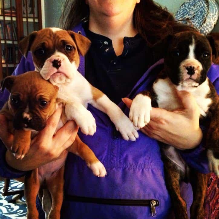 Humane Society Puppies