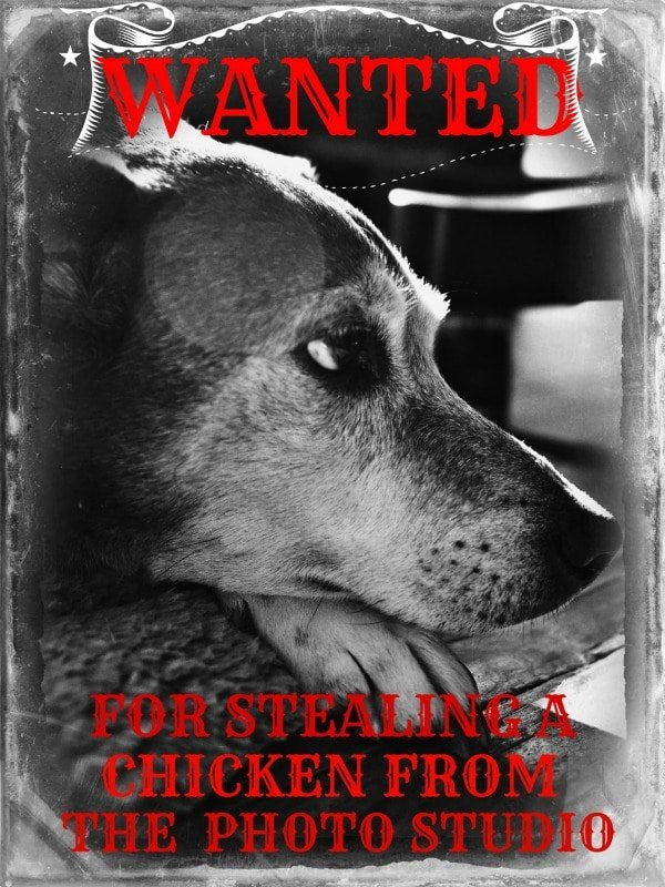 Pete Wanted Poster @loavesanddishes.net