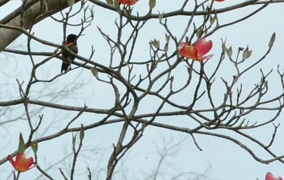 Hummingbird and dogwood blooms @loavesanddishes.net