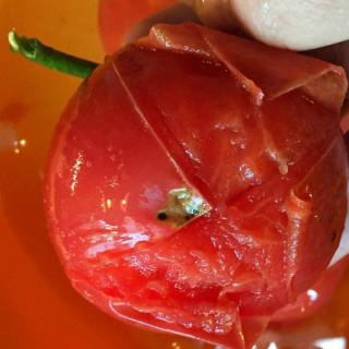 How to Easily Peel a Tomato