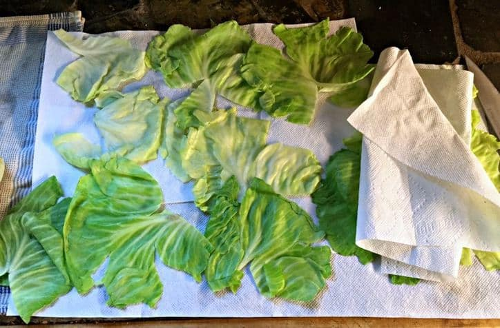 Paper towels with cabbage leaves laid out drying.