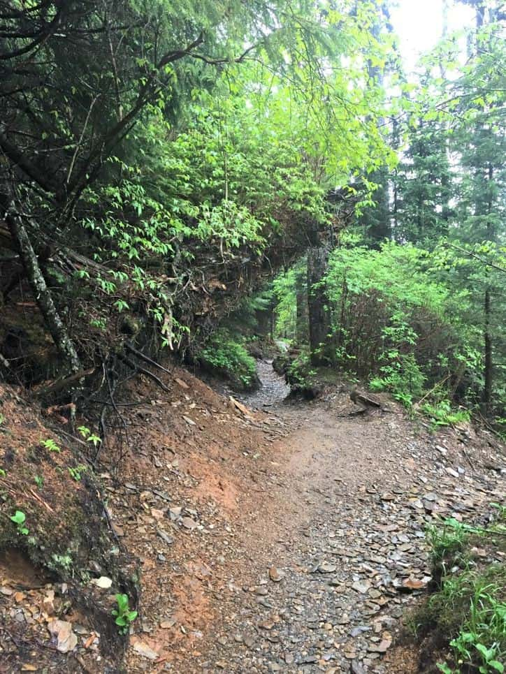 A photo of the trail running through the woods - wet with rain