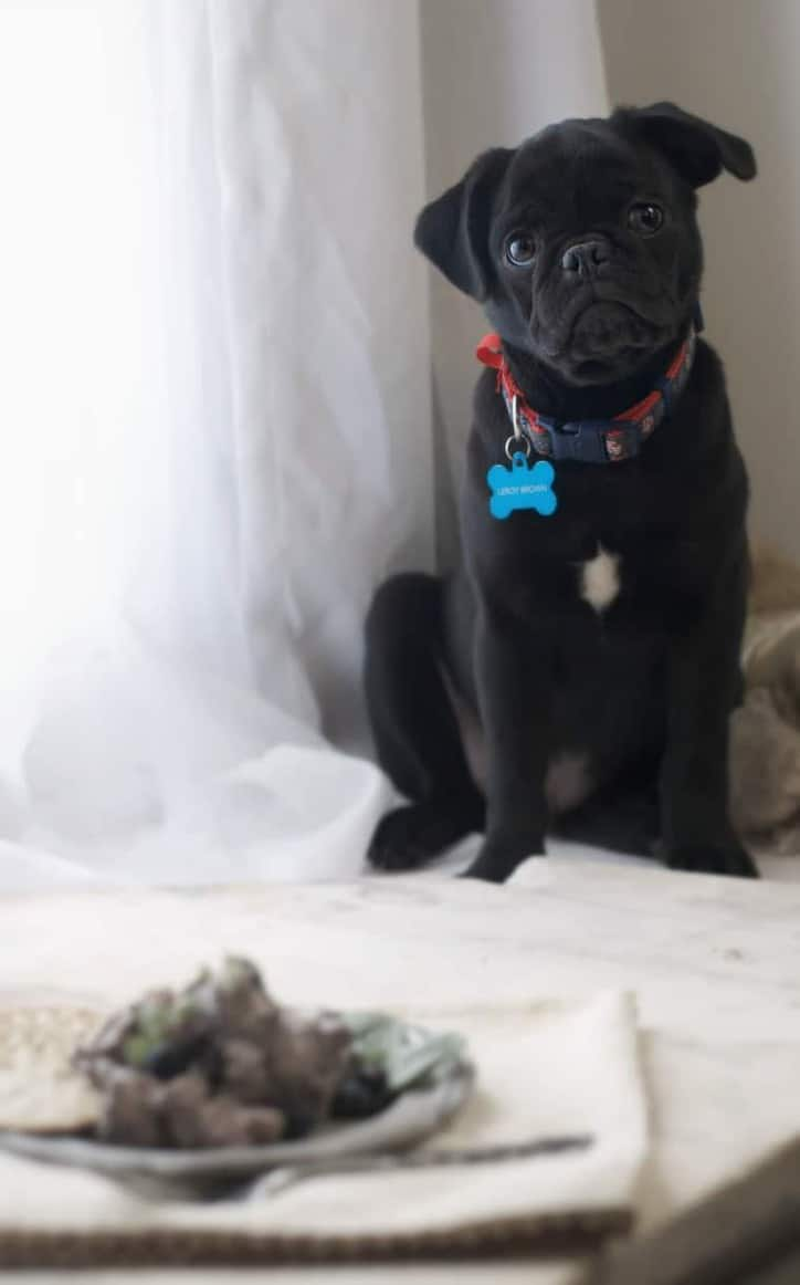 Blueberry Balsamic Chicken Salad in the foreground with Leroy Brown in the background looking sad - Leroy Brown is a black pug puppy