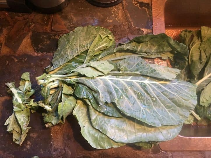 The collards with some of the bad leaves removed (to the left)