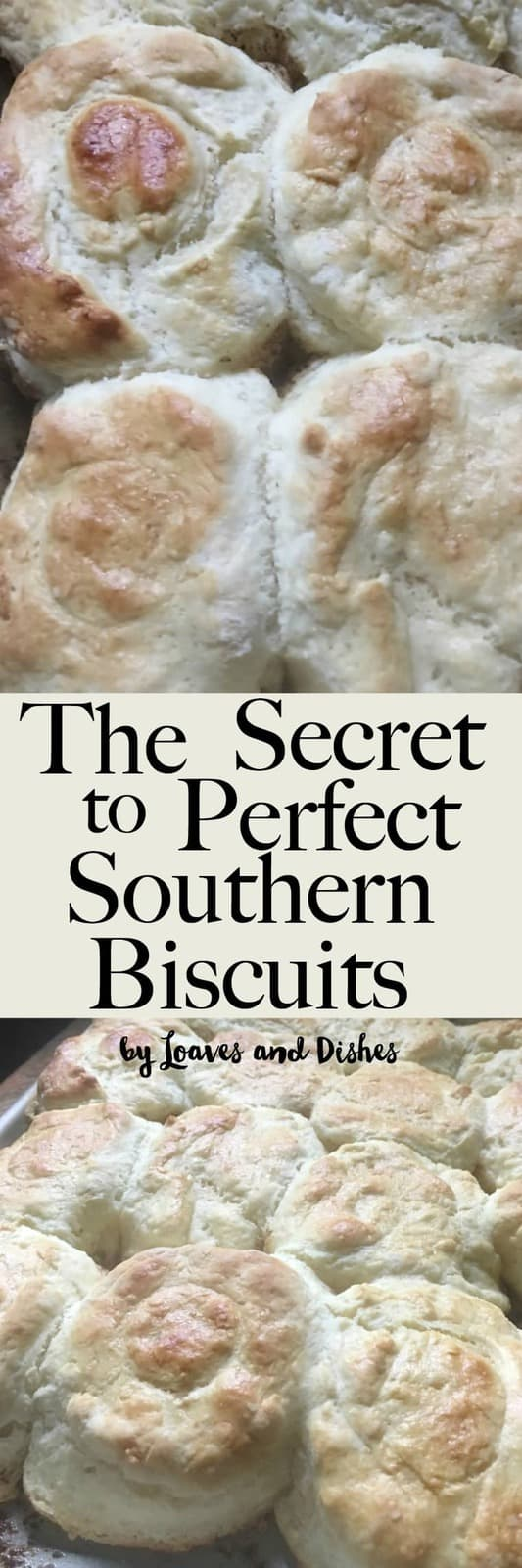 Homemade Easy Southern Biscuits made with buttermilk.  Like the Pioneer Woman or Paula Deen might make. This is the best recipe and uses self rising flour so it is all in there.  All of the steps revealed with photos and explanation.